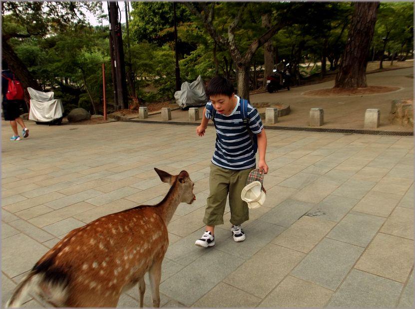 「奈良・・・鹿と遊ぶ」_d0133024_9475849.jpg