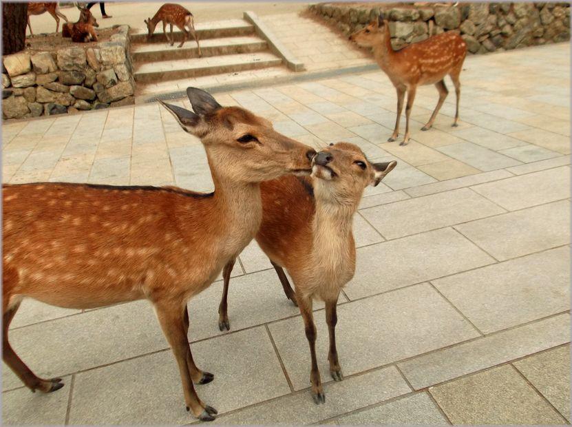 「奈良・・・鹿と遊ぶ」_d0133024_9521943.jpg