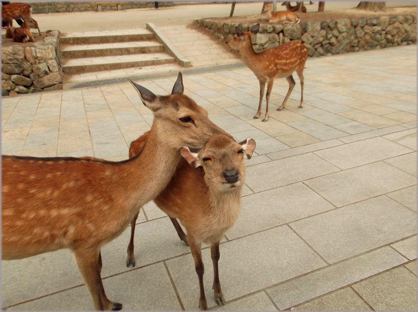 「奈良・・・鹿と遊ぶ」_d0133024_9522829.jpg