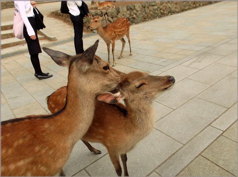 「奈良・・・鹿と遊ぶ」_d0133024_9523728.jpg