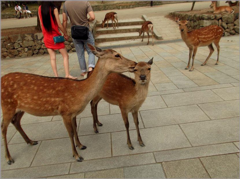 「奈良・・・鹿と遊ぶ」_d0133024_952969.jpg