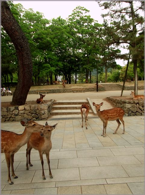 「奈良・・・鹿と遊ぶ」_d0133024_953446.jpg