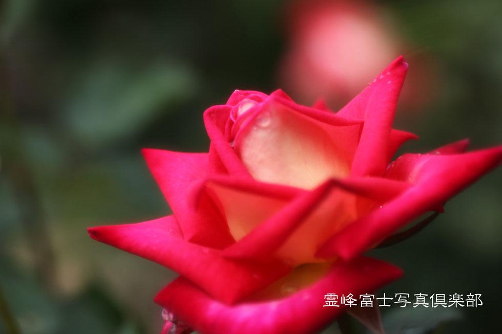 d0294539_9121967.jpg