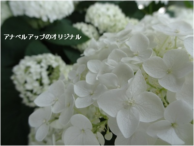 a0084343_12523025.jpg
