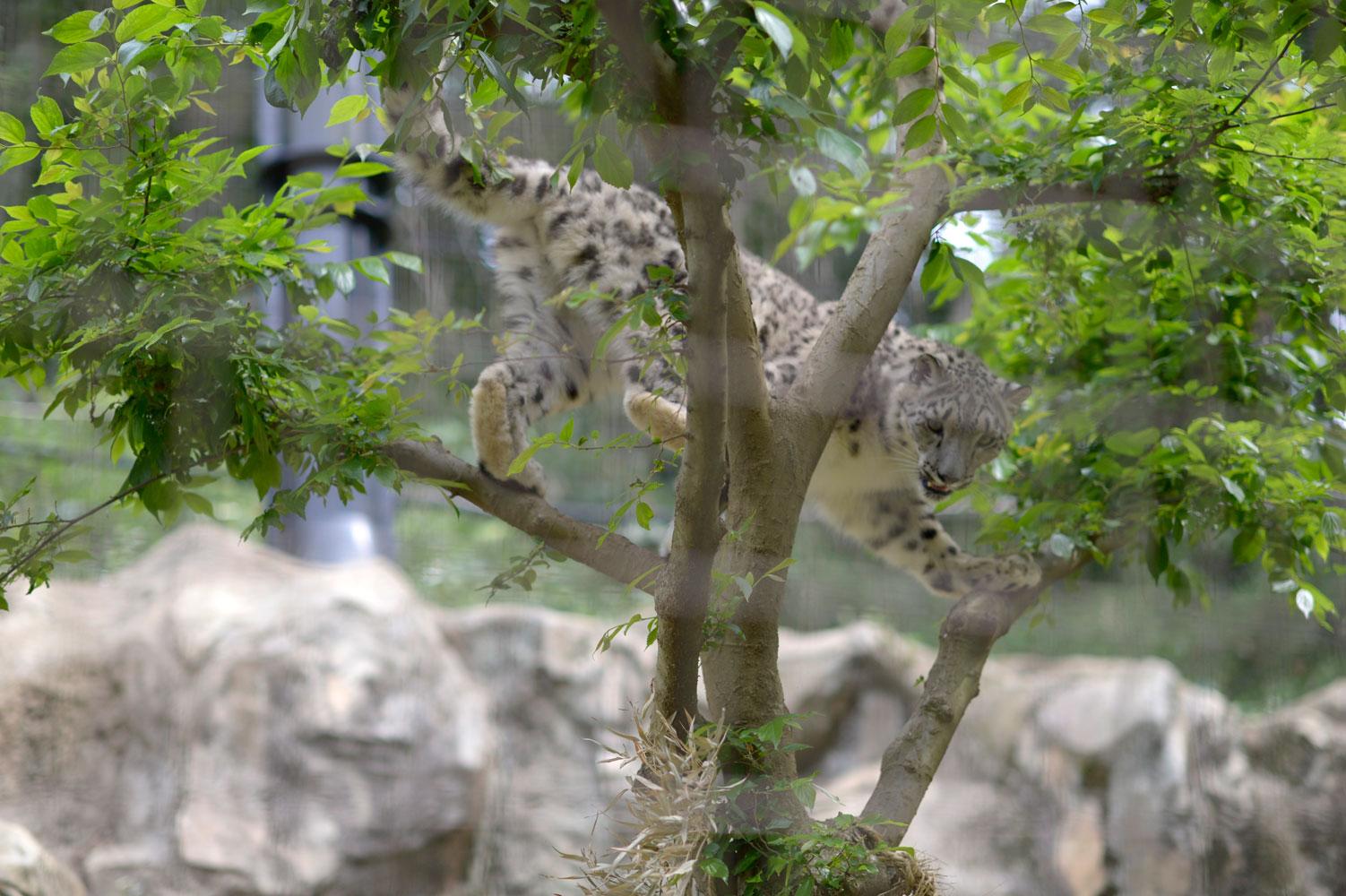 木登りは得意なんだにゃ_b0023856_7215531.jpg