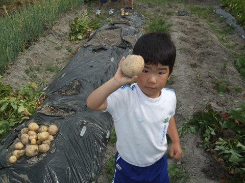 我が家の畑38 ガジャイモ収穫しました~♪_d0191262_820156.jpg