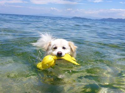カナイくんを探せ!〜白犬クイズ〜_a0119263_18323387.jpg