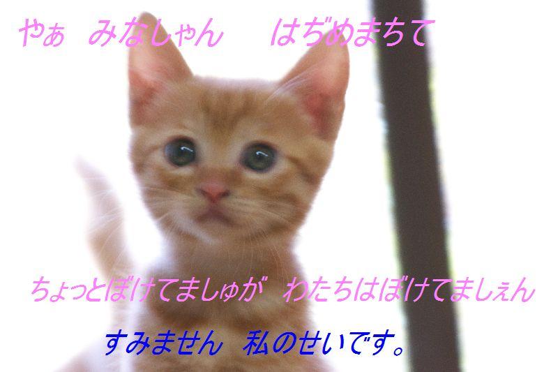 f0197682_122175.jpg