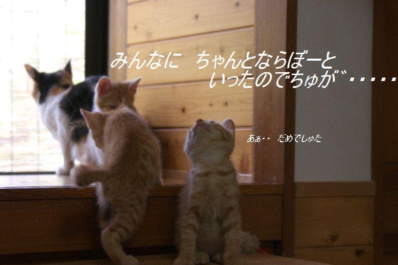 f0197682_1223091.jpg