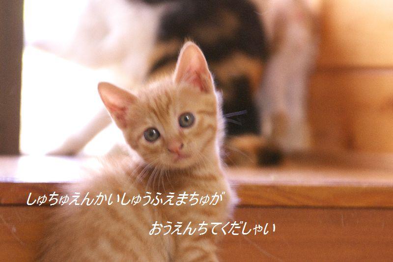 f0197682_1224193.jpg