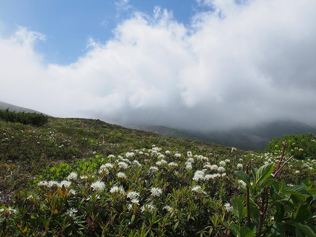 6月13日、樽前山のエゾイソツツジとコマクサ_f0138096_1524787.jpg