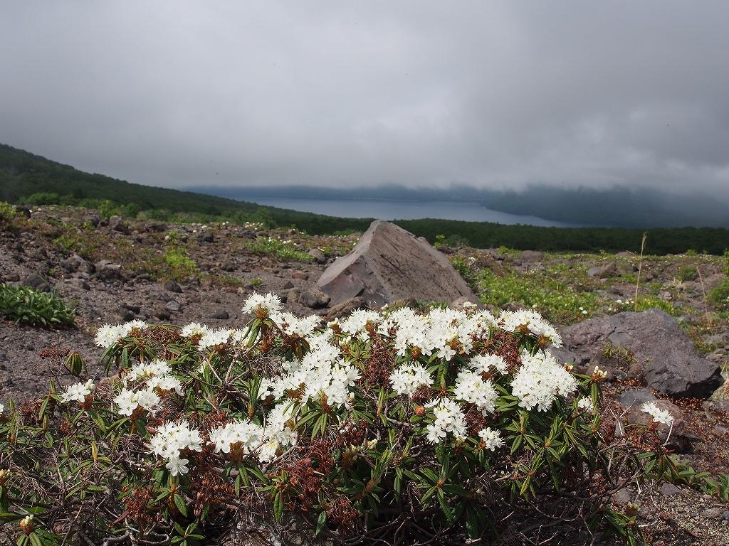 6月13日、樽前山のエゾイソツツジとコマクサ_f0138096_155597.jpg