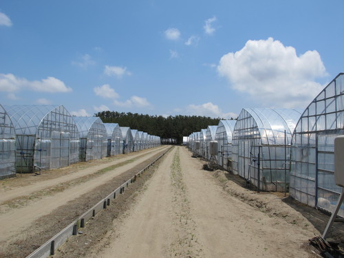 庄内砂丘メロン農園を訪ねる(5)_c0075701_18284038.jpg