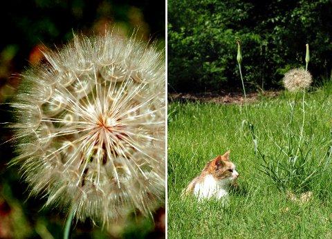 花壇と菜園の花たち(6月中旬)_b0253205_1429143.jpg