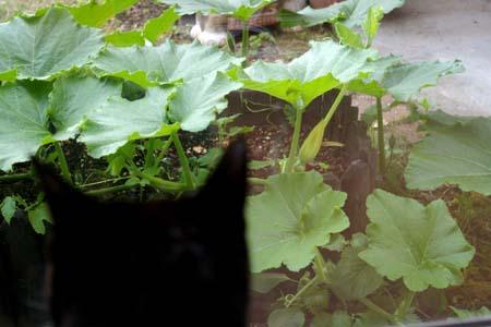 猫神家の夏。_a0063520_2144654.jpg