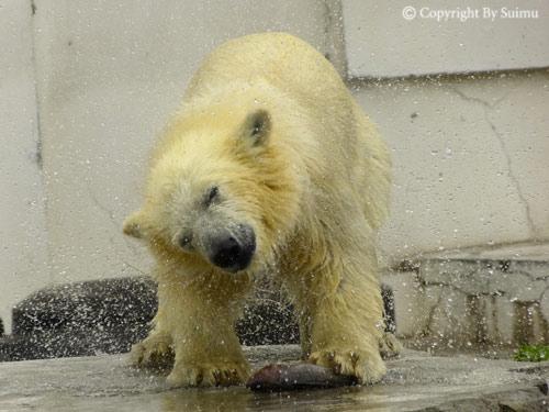 雨のち晴れの動物園_d0154140_19264015.jpg