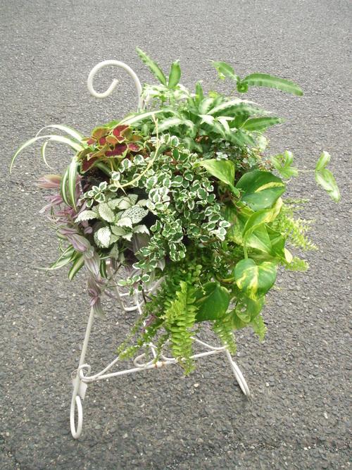 『涼しげな観葉植物 ハンギングバスケット』ありがとうございました。_b0211845_17211750.jpg
