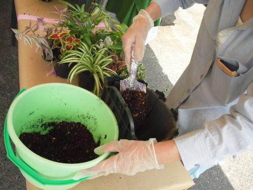 『涼しげな観葉植物 ハンギングバスケット』ありがとうございました。_b0211845_17311452.jpg