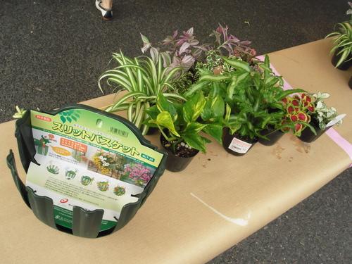 『涼しげな観葉植物 ハンギングバスケット』ありがとうございました。_b0211845_17355611.jpg