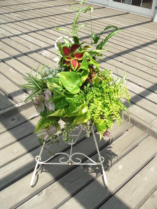 『涼しげな観葉植物 ハンギングバスケット』ありがとうございました。_b0211845_18103391.jpg