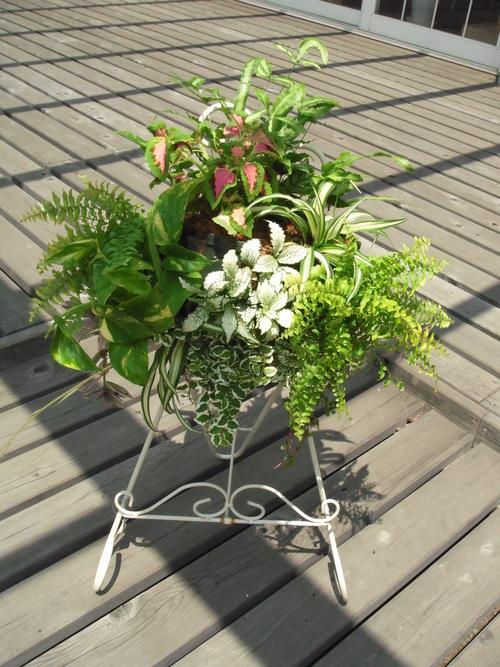 『涼しげな観葉植物 ハンギングバスケット』ありがとうございました。_b0211845_18134712.jpg