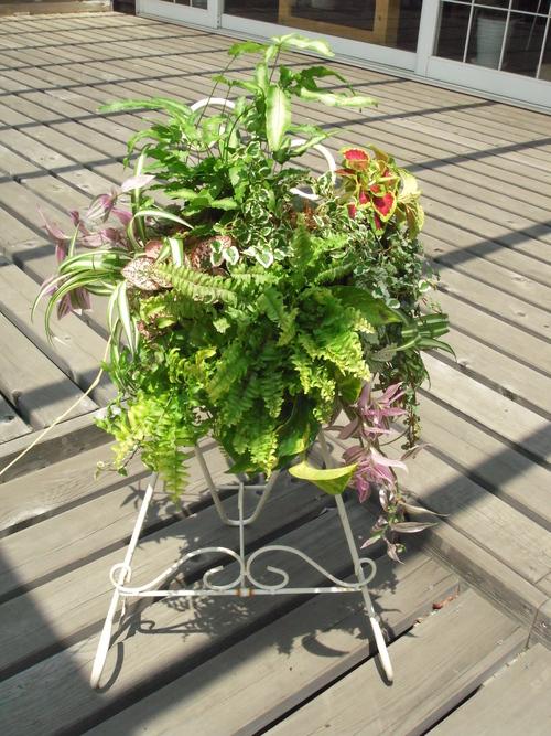 『涼しげな観葉植物 ハンギングバスケット』ありがとうございました。_b0211845_18141234.jpg