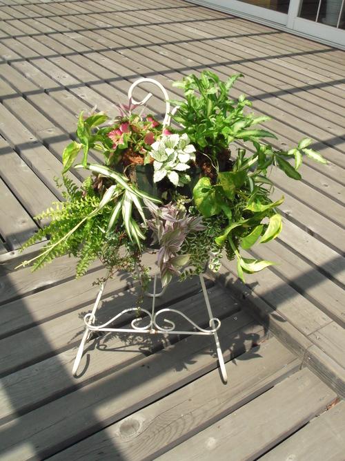 『涼しげな観葉植物 ハンギングバスケット』ありがとうございました。_b0211845_18144041.jpg