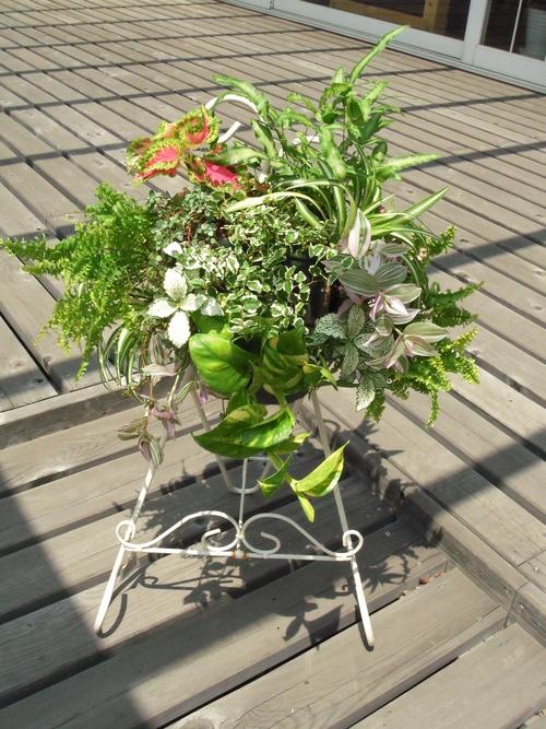 『涼しげな観葉植物 ハンギングバスケット』ありがとうございました。_b0211845_1820882.jpg
