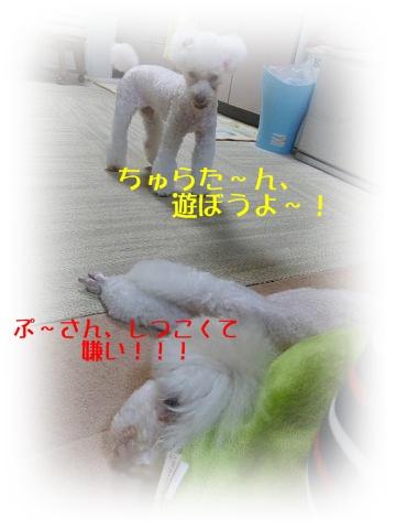 b0104592_974382.jpg