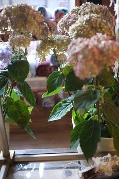 はちもの紫陽花(あじさい)イロイロ_f0226293_974152.jpg