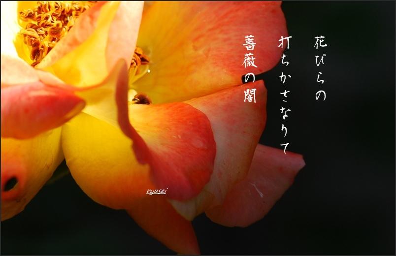 f0053297_10351632.jpg