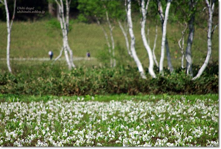 水芭蕉の尾瀬ヶ原へ・・・_f0179404_21125756.jpg