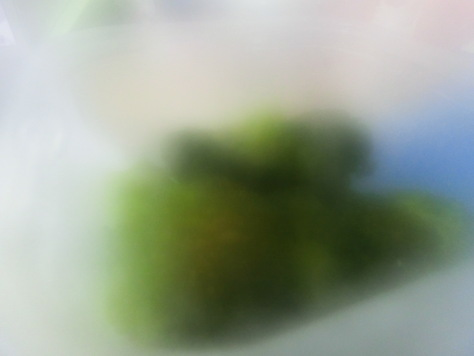 c0077330_18591052.jpg