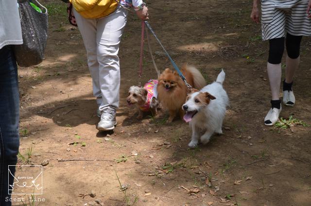 お散歩グループトレーニングクラス、前期終了!_c0099133_2143545.jpg
