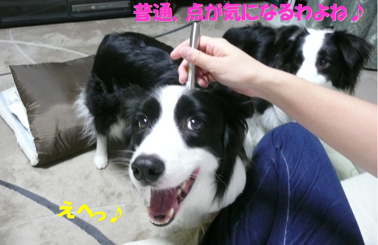 c0147241_1058495.jpg
