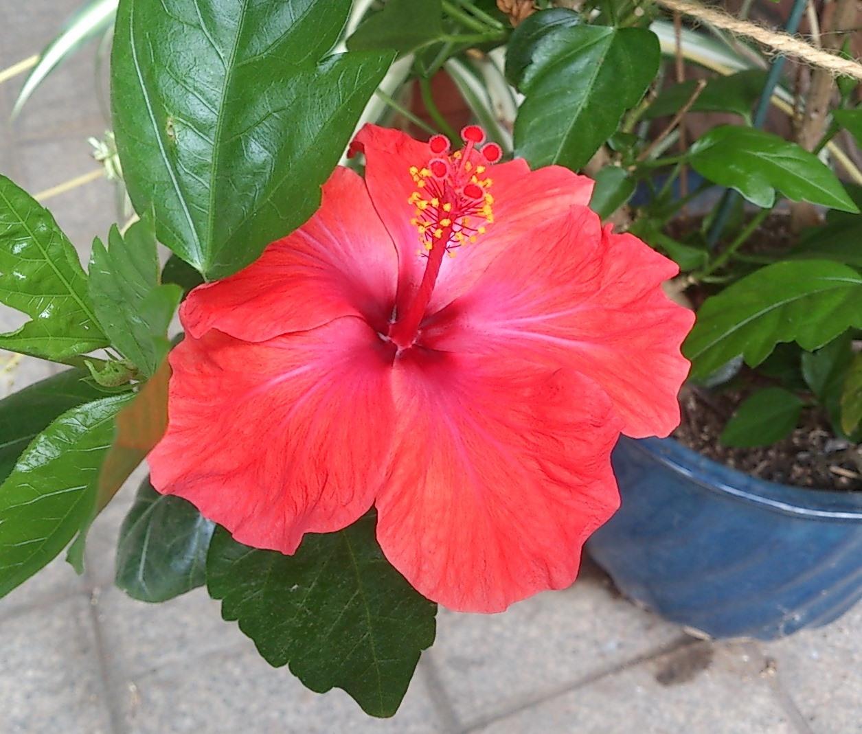 赤い花に元気をもらう_c0100865_10503970.jpg