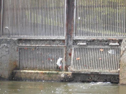 6月9日隅田川からレインボ-ブリッジまで_c0249569_9355630.jpg