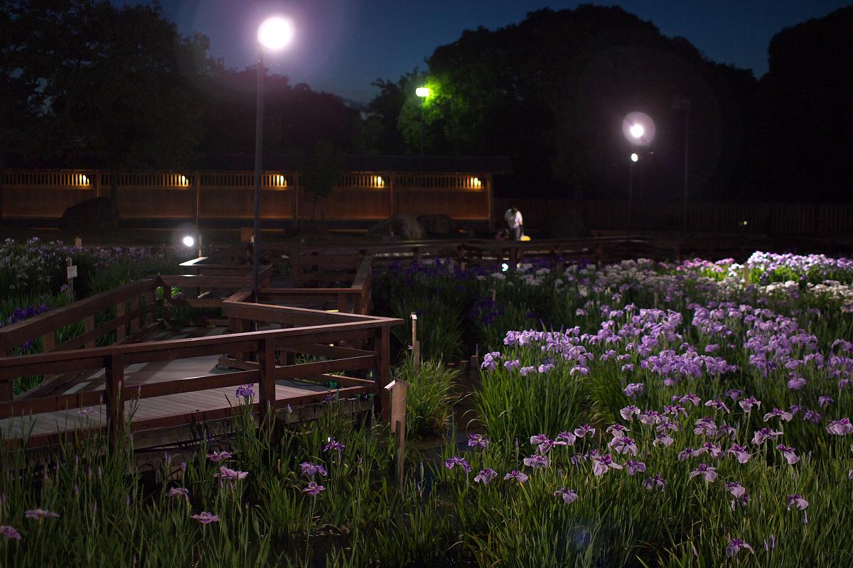 花菖蒲 2013 <山田池公園> _f0021869_23514245.jpg