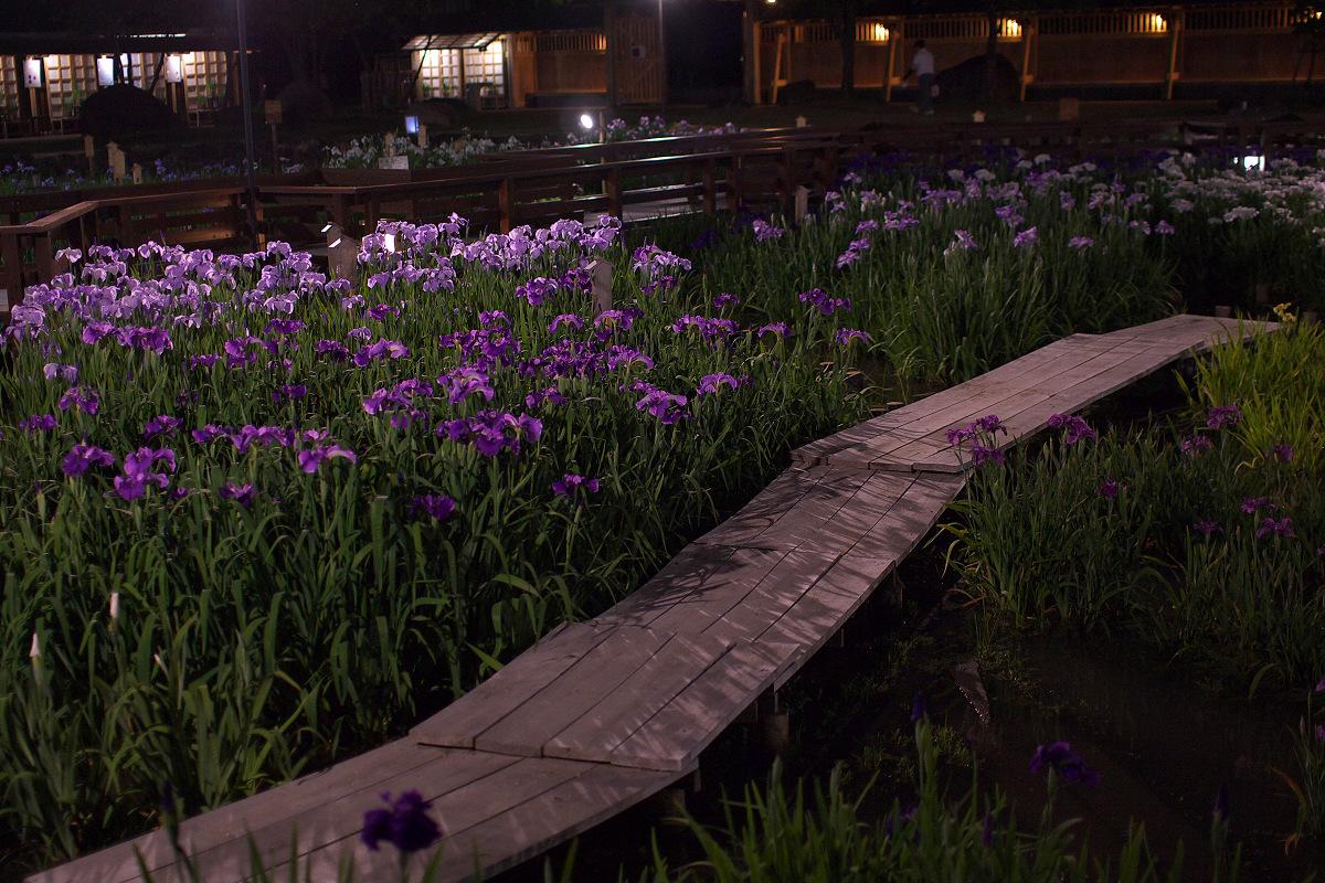 花菖蒲 2013 <山田池公園> _f0021869_23515329.jpg