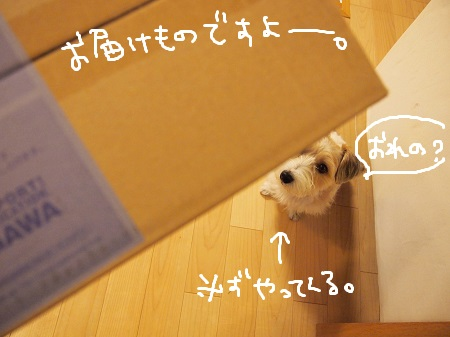 b0092580_13372681.jpg