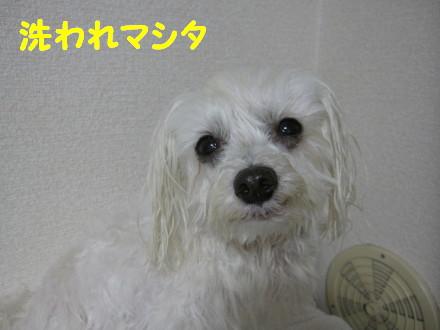 b0193480_17185330.jpg
