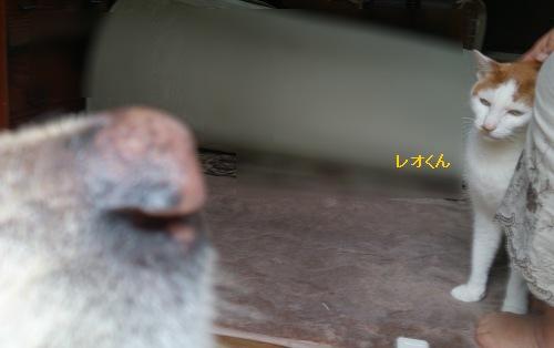 b0136381_21563510.jpg