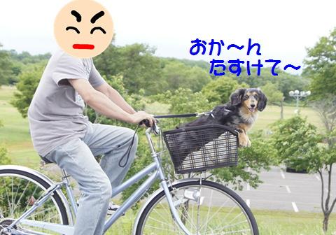 f0195891_2011432.jpg