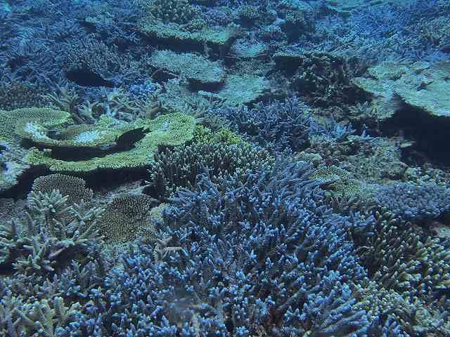 2013年6月西表島ダイビング 3日目昼 196~198本_c0118393_18162730.jpg