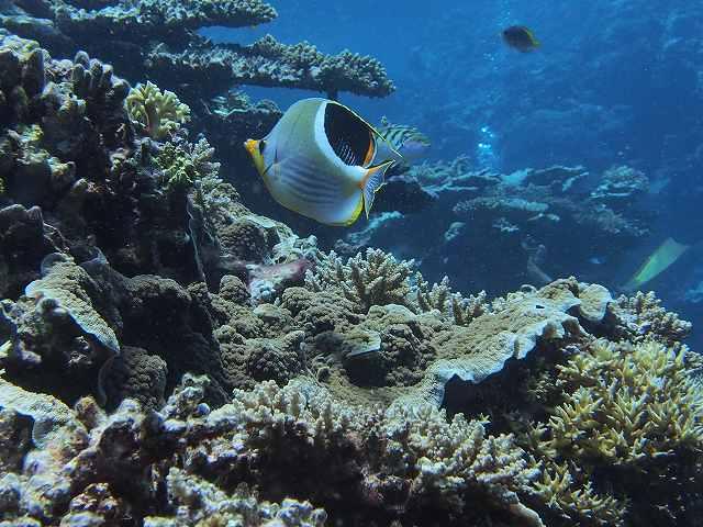 2013年6月西表島ダイビング 3日目昼 196~198本_c0118393_18351233.jpg