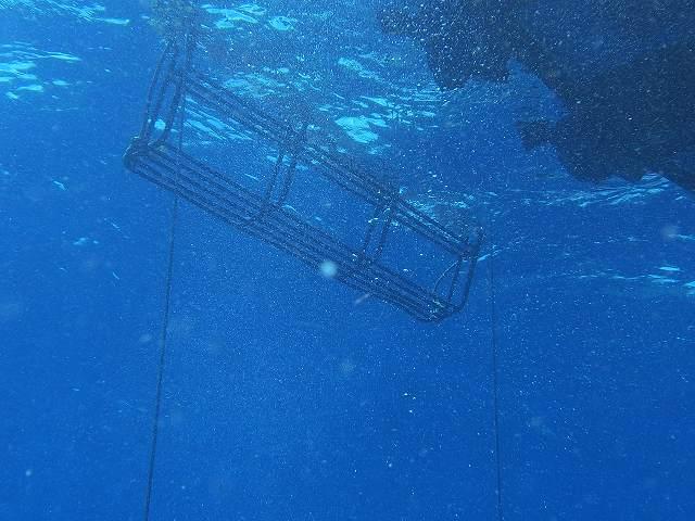 2013年6月西表島ダイビング 3日目昼 196~198本_c0118393_1837517.jpg