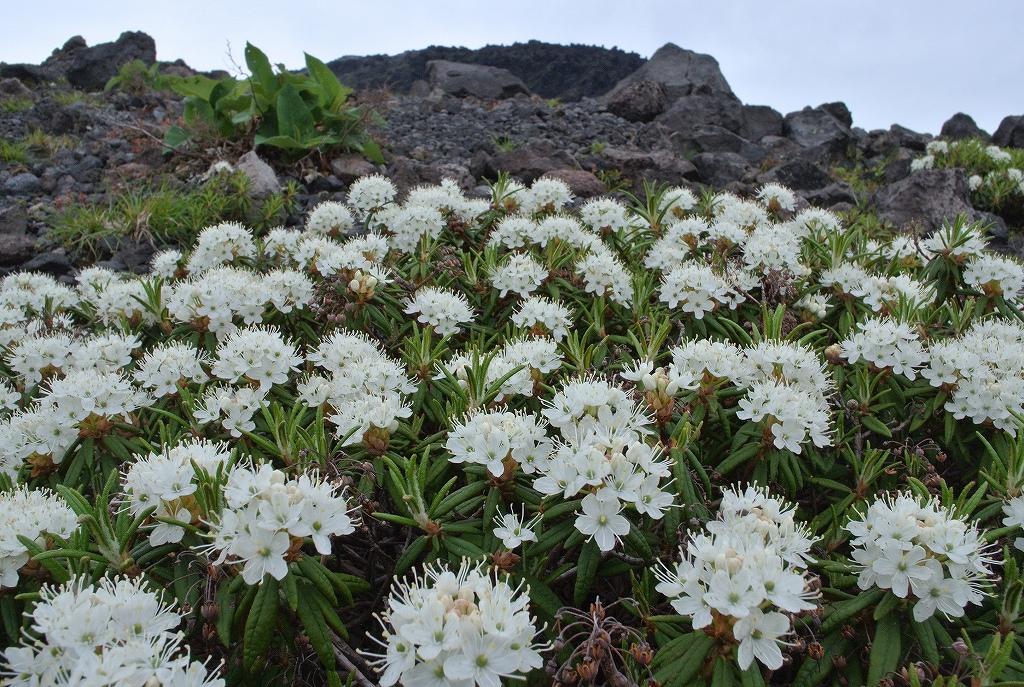 6月16日、風不死岳と樽前山_f0138096_18393867.jpg