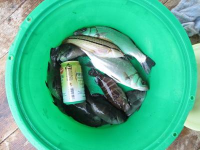 8ヶ月ぶりの海釣り_e0150006_2322076.jpg
