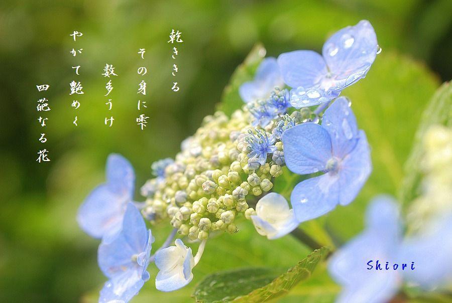 c0187781_018198.jpg