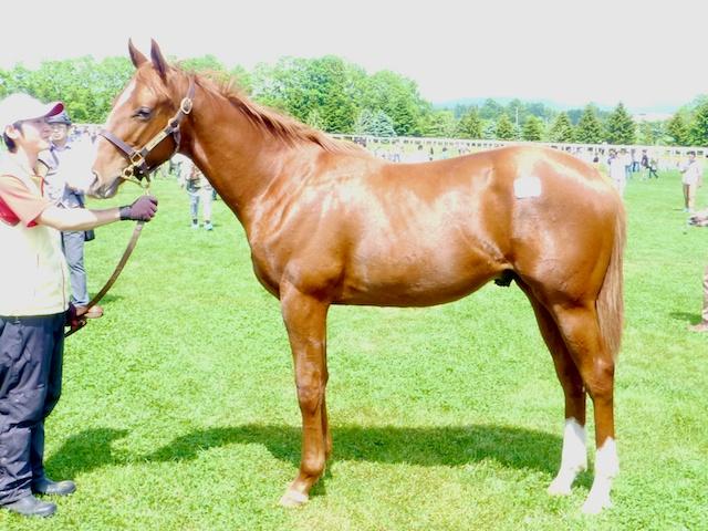 2013年社台募集馬ツアーを終えて_a0036685_23454191.jpg